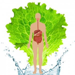 detox and digestion