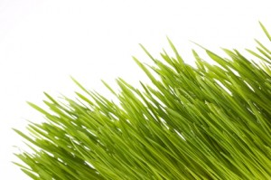 Spring Into Vitality - Flourish
