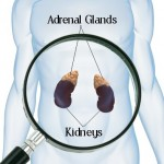 Adrenal Assessment - diagram