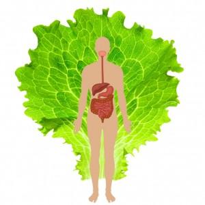 natural digestive repair