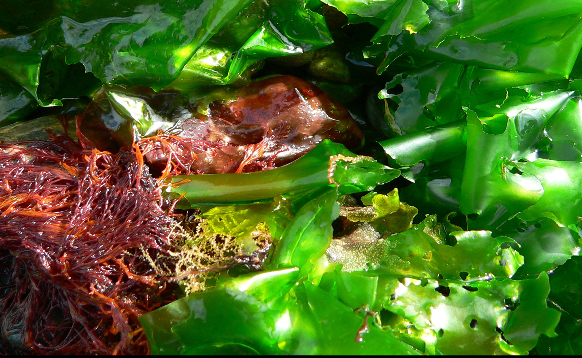 Recipe: Adaptogenic Seaweed Soup (Delicious and Nourishing)