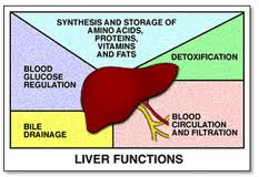 Radio Show: Your Liver, Parasites, and the Healing Crisis