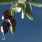 Practitioner Corner: Olive Leaf for Insulin Resistance