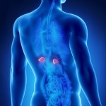 Fat, Fatigued, Foggy, Frantic and Flatulent: The 5 F's of Adrenal Burnout