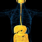 Radio Show: How Your Gut May Guide the Workings of Your Brain