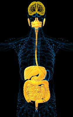 Radio Show: Gut Hormones and the Anti-Inflammatory Effects of the Nervous System