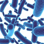 Radio Show: Specific Benefits of Five Probiotic Bacteria and the Best Ways to Use Them